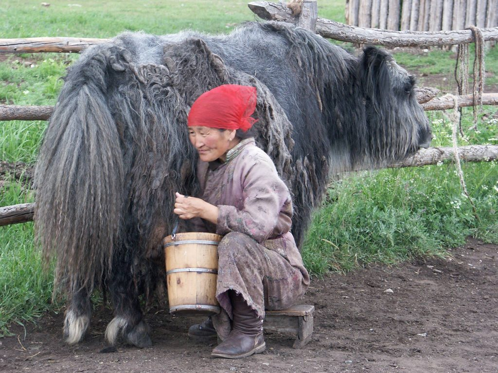 Mongolian Handicrafts Yak Wool trade fair