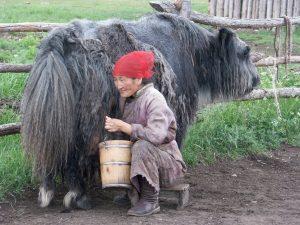 Mongolian Handicrafts Yak Wool trade fair