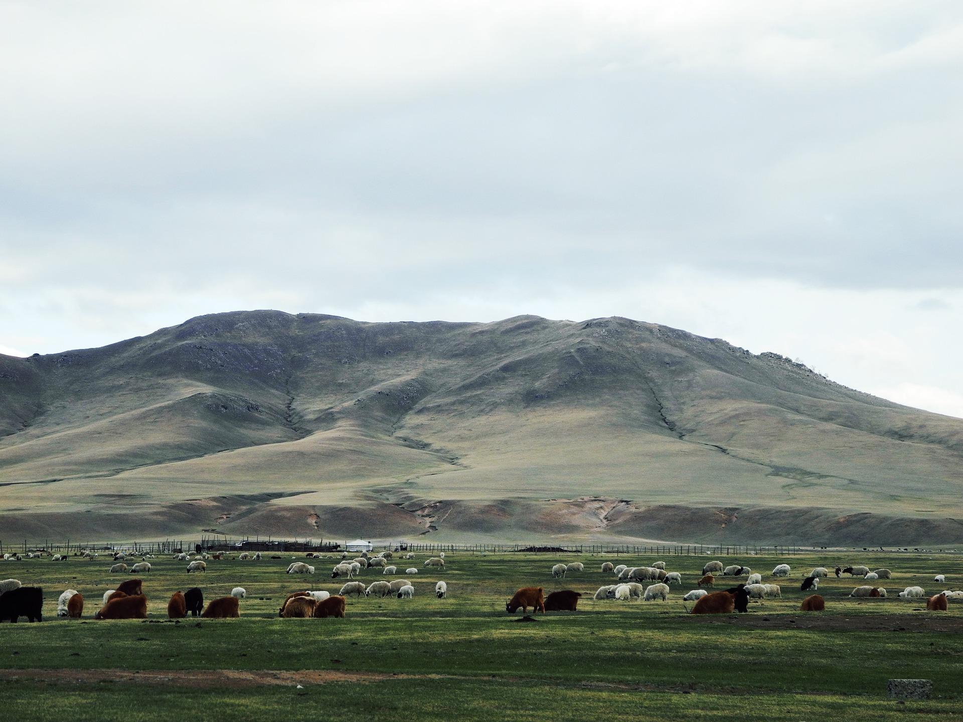 Mongolian Handicraft Trade Fair Sheep