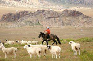 Organic Mongolian Handicrafts Sheep Wool trade fair