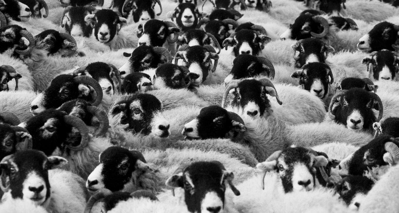 Mongolian Handicrafts Sheep Wool trade fair