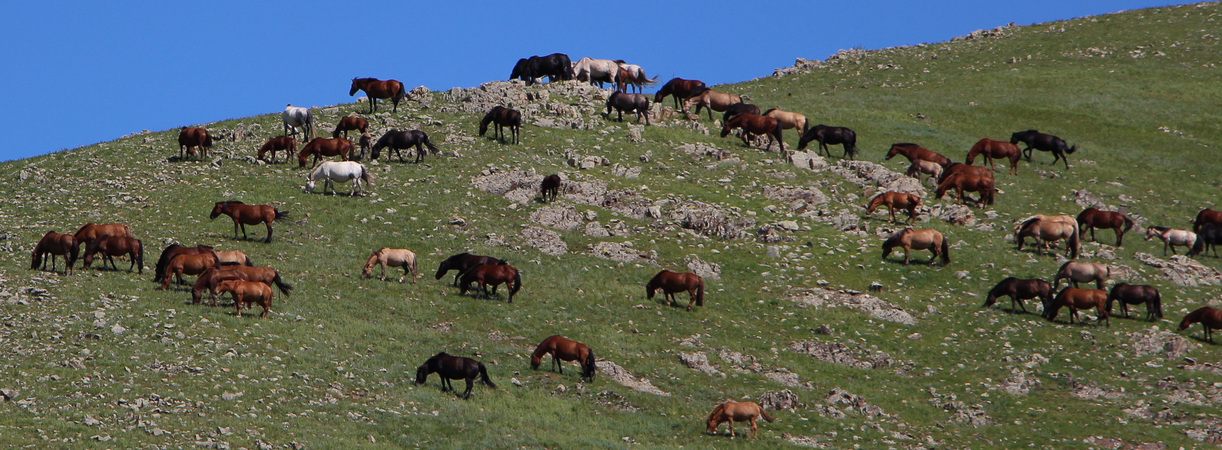 Mongolian Handicrafts yaks wool sheep camel fair trade natural products universal responsibility post